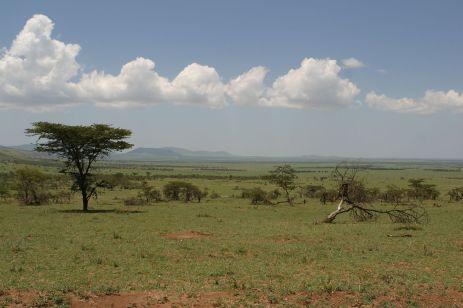 Serengeti - Grenze Kenia