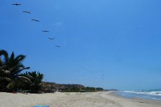 Am Pazifikstrand - Pelikane im Formationsflug