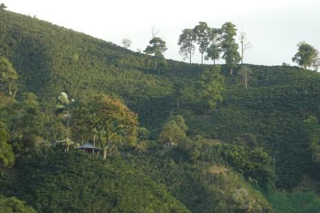 Finca Guayabal Kaffeefarm