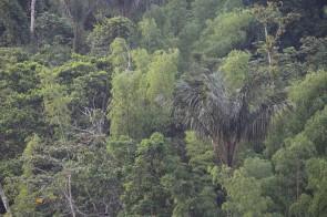 PN Yasuni, Tiefland, Amazonas,