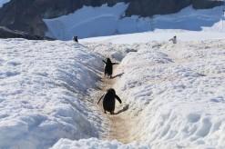 """""""Pinguin Highway"""""""